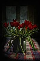 My Tulips by Flash-and-Flair