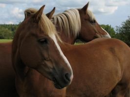 Two finnish horses by Garbuend