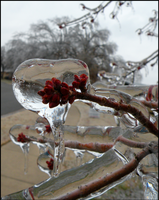 December Ice 1 by Leonca