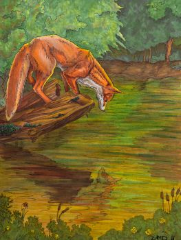 The fox and the pond by hydraa