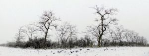 winter panorama. by kingdaughter