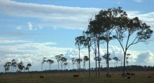 Outback country by RakelClark