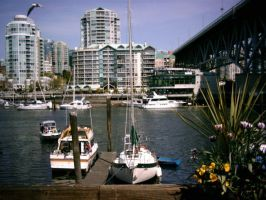 Harbour by morgie39