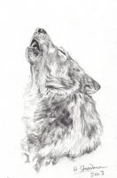 Brother Wolf by Utlah