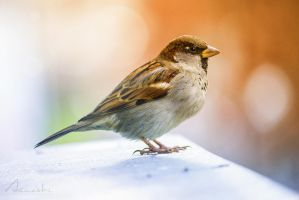 Birdy by Janeski