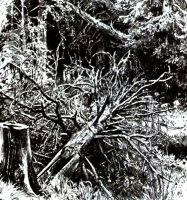 Mirkwood drawing on paper white and black ink by masiani