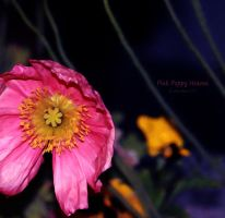 Pink Poppy Heaven by creativemikey