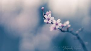 Spring in pastel by FeliDae84