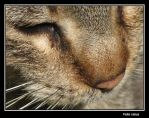 Felis catus by painting-with-light