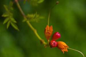 berries 1 by elspeth-66