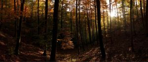 The Beauty Of Autumn In The Middle Of A Wood by TheFearlessHiker