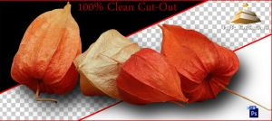 Clean Cutout of Physalis by HJR-Designs