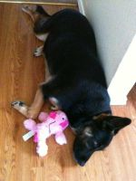 Sheba and pink puppy by RavingPink