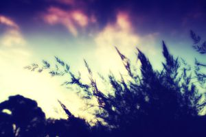Lomography II by gthersh