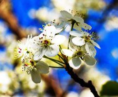 flower in spring by moloko