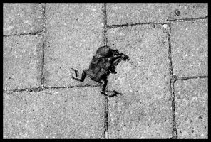 A dead frog by S3xyGlass3s
