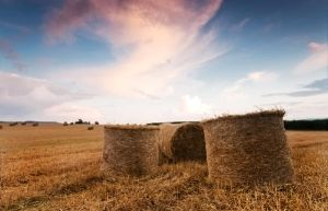 .: Evening Hay Bails :. by Dave-Ellis
