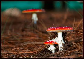 Pine needles and mushrooms by heartyfisher
