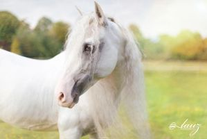 Horse 2 by lauzphotography