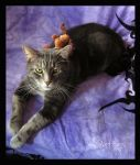 Cat-WraithandMoose-001 by SapphireIceAngel