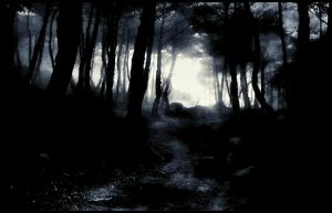 Light And Darknes In Forest 1st January by eskile