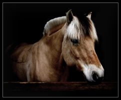 Horse by Nocturne05