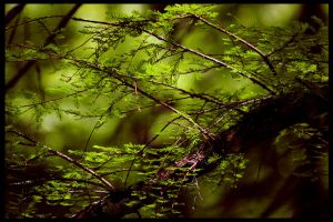 Forest Fern by RobertRobledo
