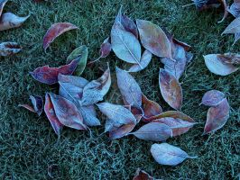 Frozen Leaves by harrietsfriend