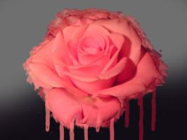 Rose Drip by Shapony