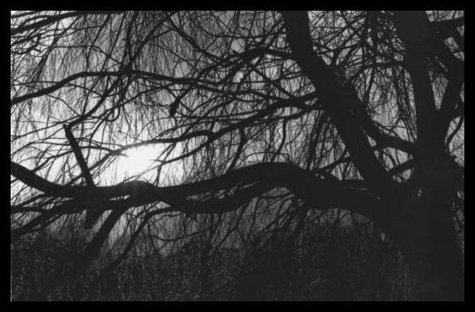 Branches by devotion-and-desire
