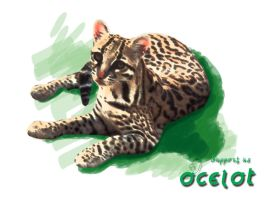 Support Ocelots by Frhaine-Shaia