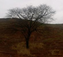 Tree without leaves by ManatheDMG