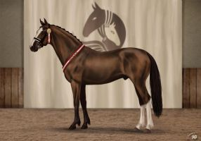 ZZOS 1st place | Dressage by Zoubstance