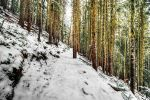 Winter Arrives by IvanAndreevich