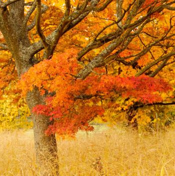 Automne Flamboyant I by madvax