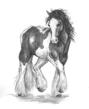 Gypsy Vanner by emele-the-strange