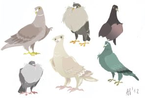 Pidgeons by snowapples