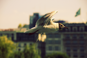 seagull by ValiCaptures