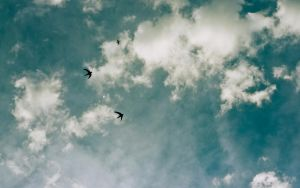 Swallows by WillhelmKranz