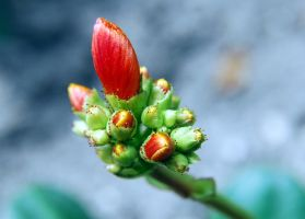 Flower bud macro by Mark-Allison