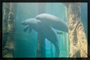 Manatees at Nuremberg Zoo by deaconfrost78