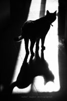 Purr-fect silhouette by Chanklish