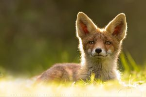 Big Eared Baby by thrumyeye