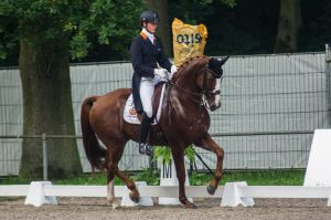 Dressage Stock - XXIV by Summerly