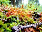 Colorful Moss! by MarciP