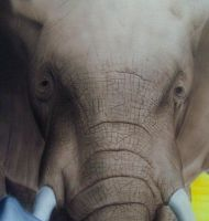 Elephant Head Close Up by MikeLangston