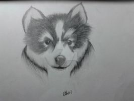 Puppy Drawing by Wumzie