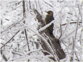 Snowy Flicker by SuicideBySafetyPin