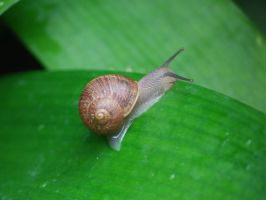 Snail by JessicaEdwards