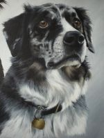 Blue by petportraitman